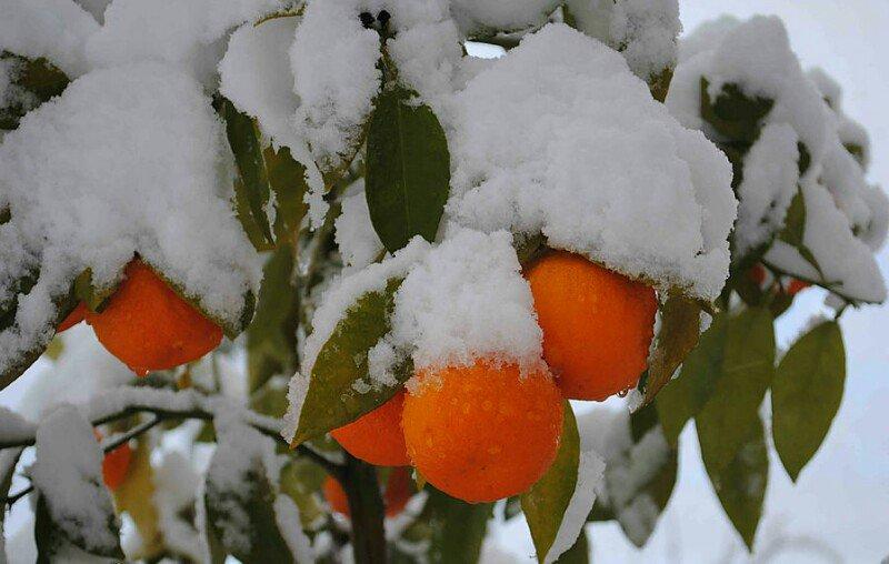 Фрукты в снегу картинки