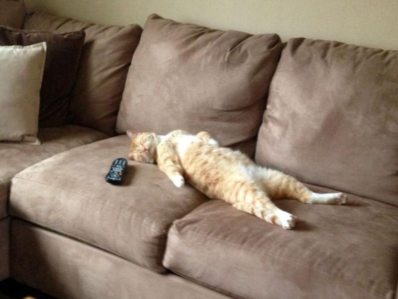 Заполнить онлайн, прикольные картинки об отдыхе на диване