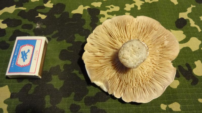 грибы есть или нету