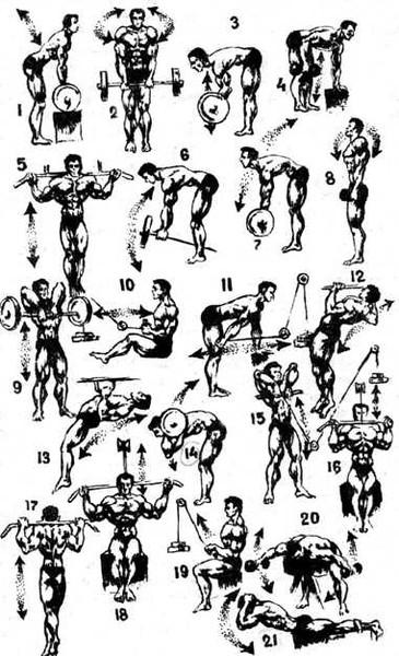 домашние упражнения с гантелями в картинках