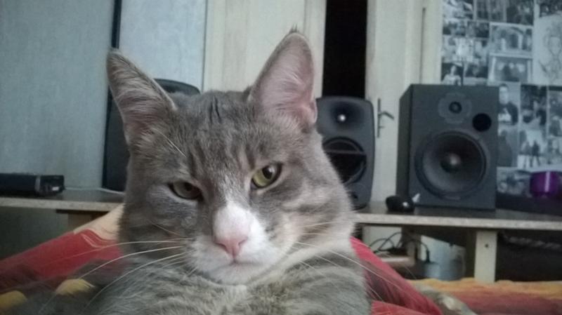 Кот не метит но постоянно сексуально озабочен
