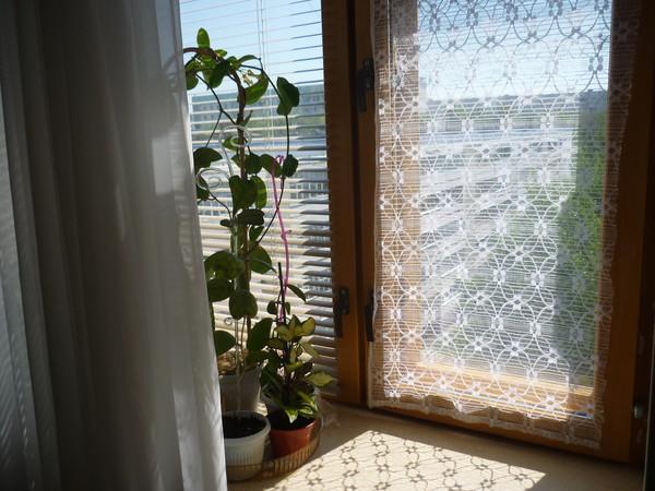 Ответы@mail.ru: как вы затеняете свои окна, защищая растения.