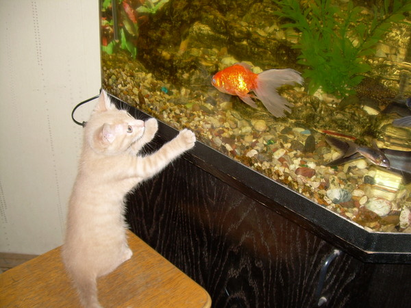 Коты и рыбки в аквариуме