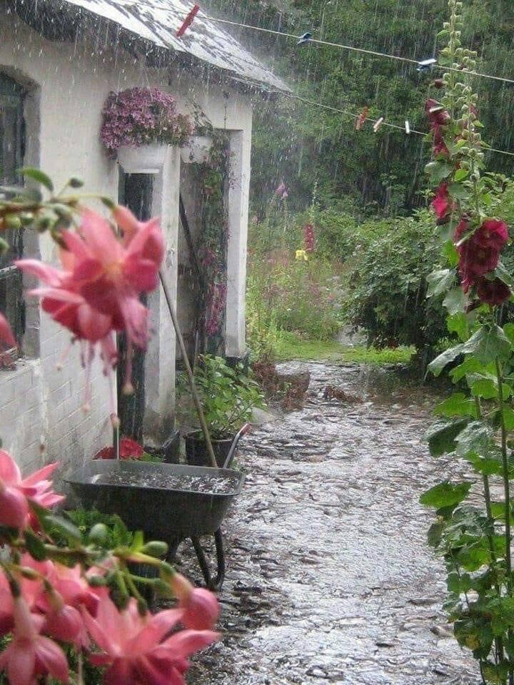 делали картинки дождливое утро на даче сможете совершить покупку