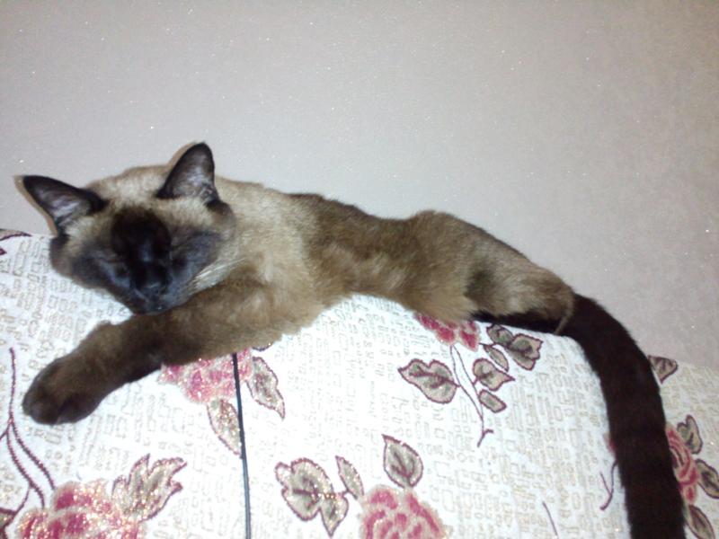 Кот агрессивен на кошку