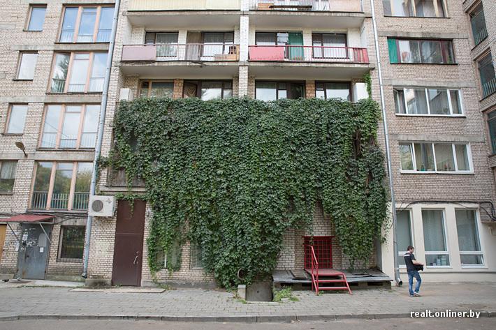 Ответы@mail.ru: как вырастить на балконе виноград?.