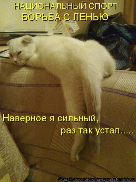 Хорошего вечера, смешные картинки про лень и усталость
