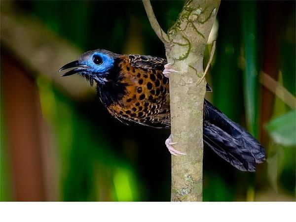an overview of birds