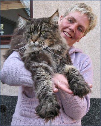 Коты большие пушистые