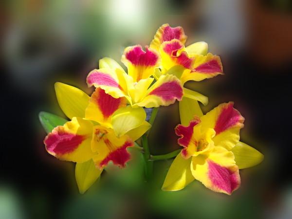 Что делать когда орхидея отцветает