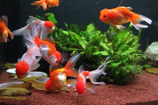 облегающего сколько рыбок в аквариуме для здоровья по фэншую функция термобелья