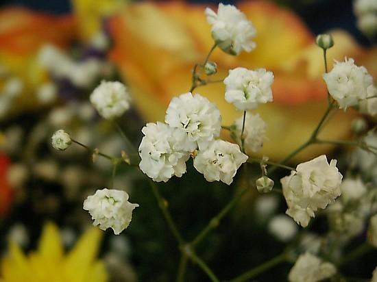 Белые мелкие цветы для букетов