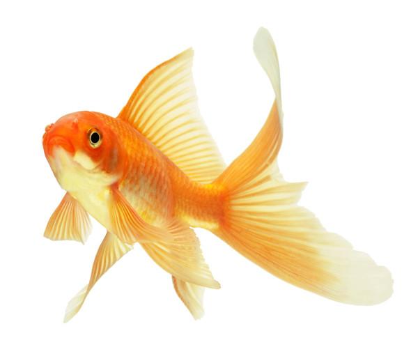 Goldfish IT und MedienService