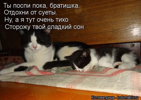 Доброй ночи братик картинки прикольные