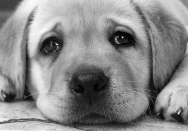 картинки как скучают животные объявления