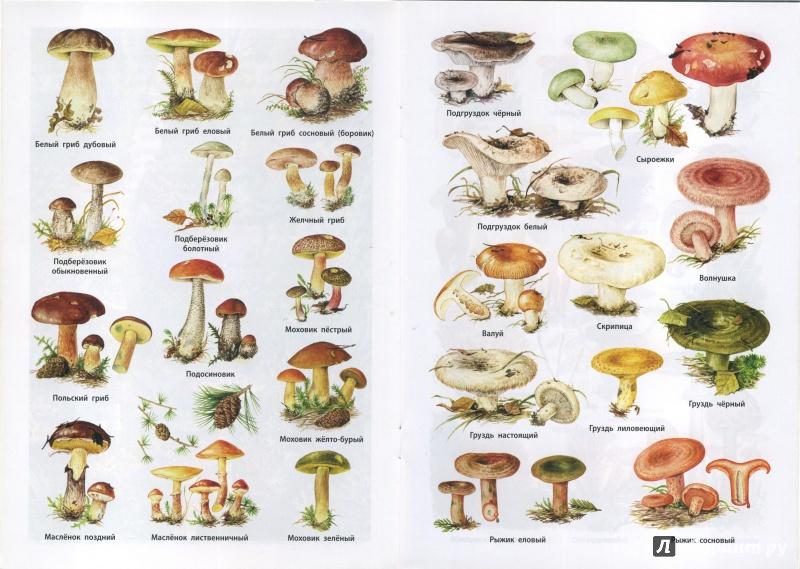 аккаунт инстаграме фото и названия всех видов грибов всего времени