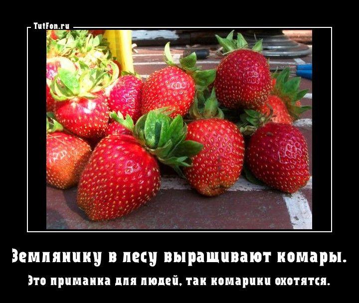 Смешные картинки про клубнику с надписями