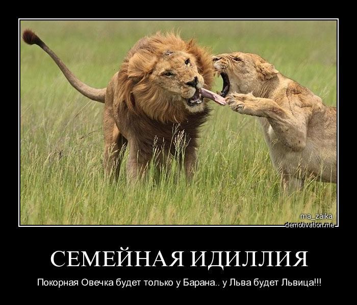 это гормональное как мириться с недостатками льва карта Познани для