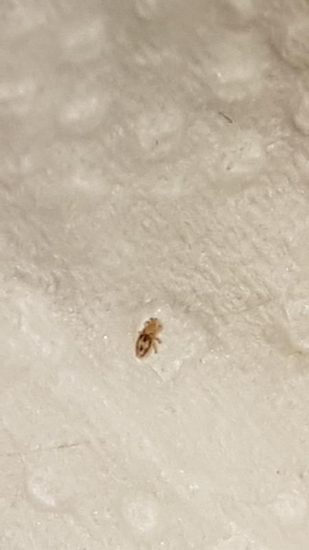 мелкие еле заметные жучки в доме