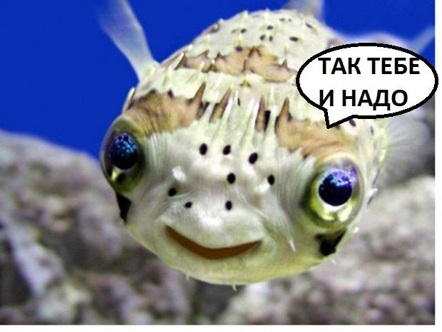Ответы@Mail.Ru: Помогите. После того как поем рыбу, голова ...