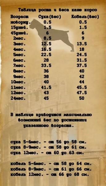 догола таблица роста и веса кане корсо ассортимент