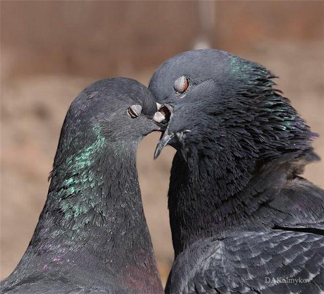 это только голубь обнимает картинки движения
