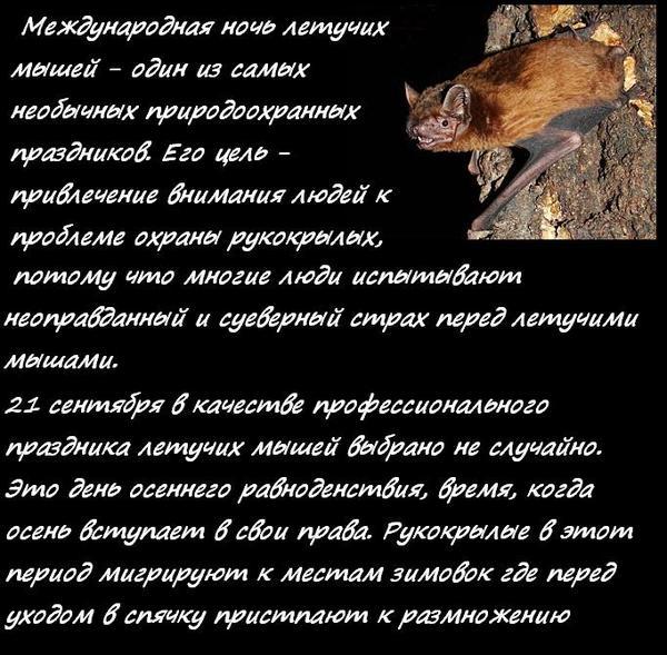 Открытки с ночью летучих мышей