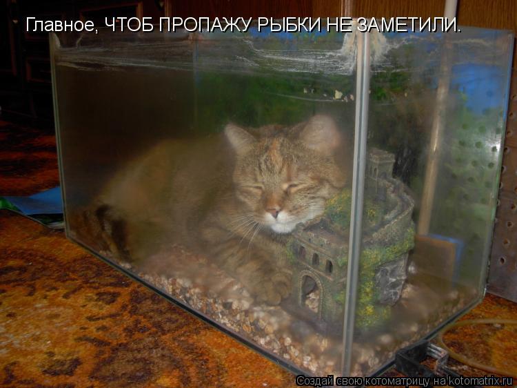 Смешные картинки про аквариум, днем