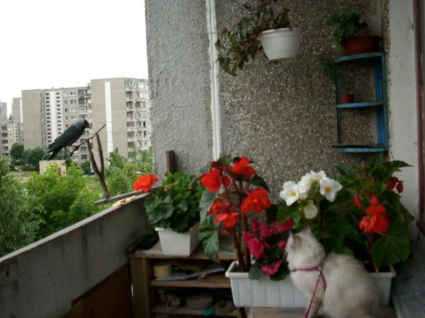 Ответы@mail.ru: скоро весна, лето... какие цветы садите на б.
