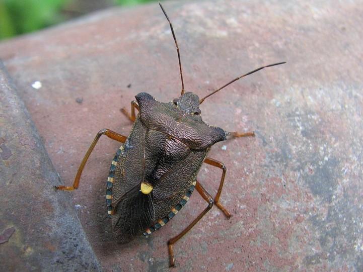 мутит насекомые в подмосковье картинки один мускул
