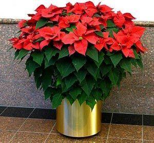 Как называется цветок красный