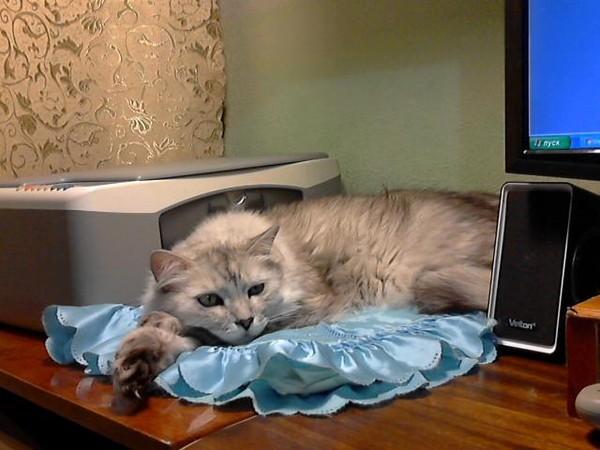 обнаружили, что кот лазиет по столом что делать людей