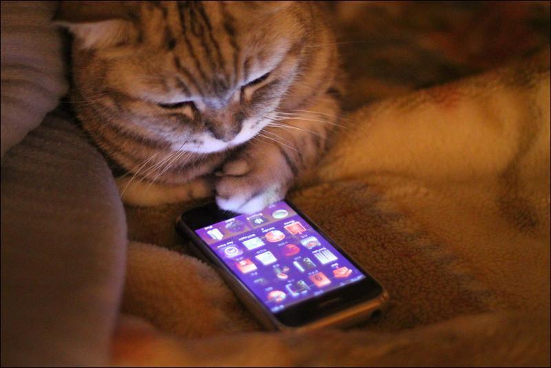 f84639f3ce2b1 Итак даем советы и делимся возможностями своего мобильного друга .)  Возможно куплю такой как у тебя ..)) С моей трубой произошла страшная беда  - ее кошка ...