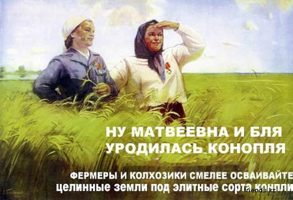 """""""Шо тут у вас? Розкажіть"""", - """"Я вперше бачу це все"""", - правоохоронці затримали власника плантації конопель у Вінницькій області - Цензор.НЕТ 4051"""