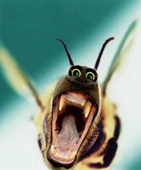 Фото, смешные картинки шершня