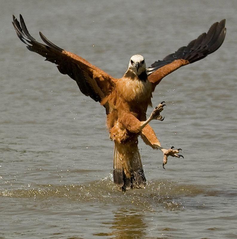 Орел прикольная картинка, днем вдв