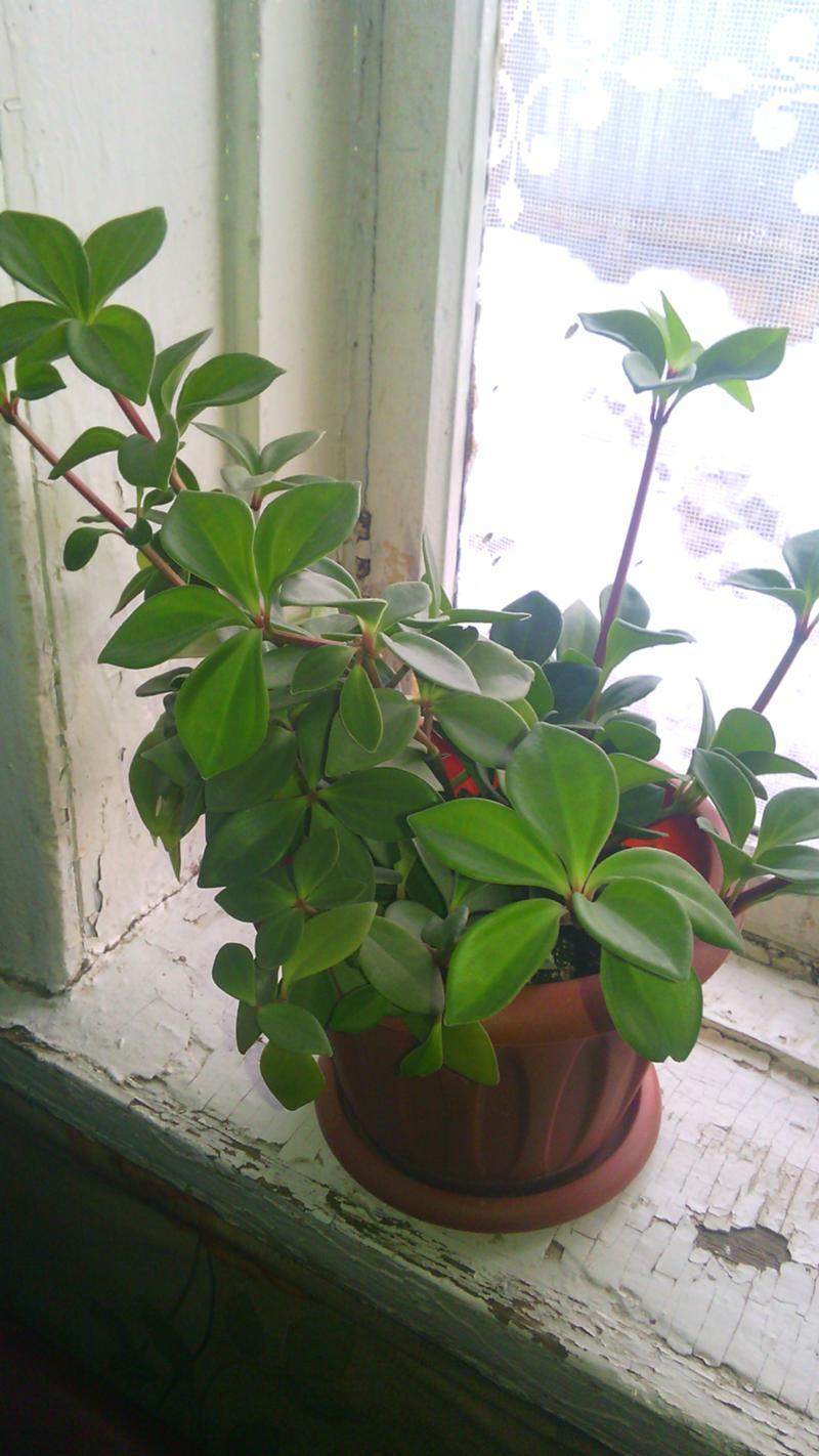 очаровательная певица как по фото определить название растения южного самые интересные