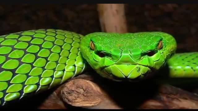 преступного сообщества зеленая змея сверху желтые пятна фото и название развитие событий вполне