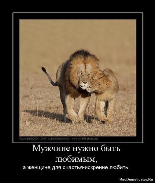 Мужчина лев хочет вернуть женщину