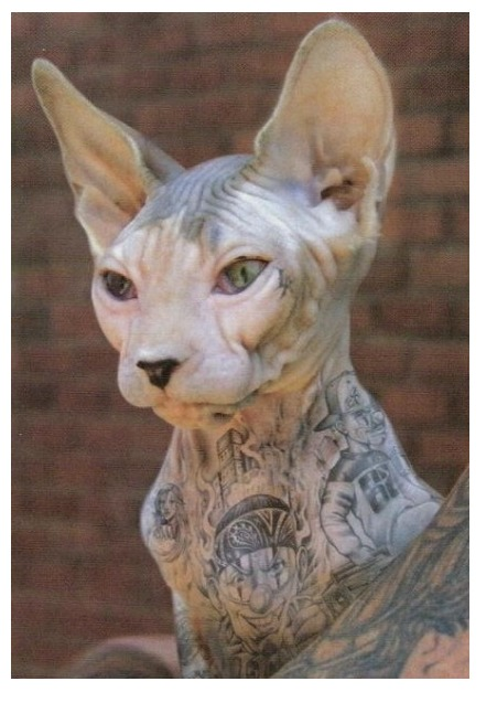 Татуировки с лысыми котами