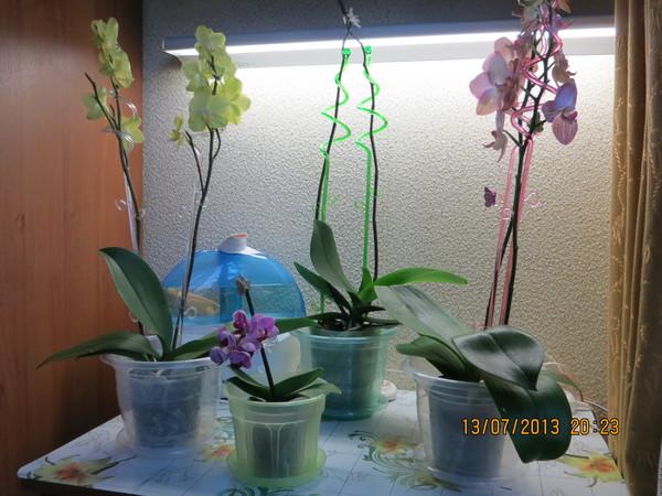 Орхидея сбросила цветы что делать дальше
