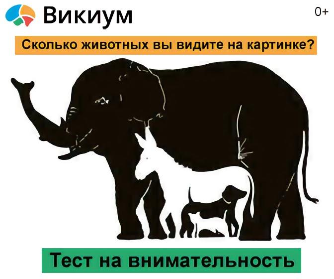 проблем сколько животных вы видите на картинке правильно итоге