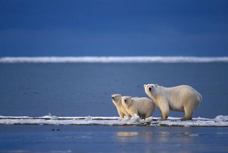 Картинки природы северного ледовитого океана