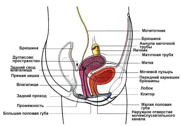 Фото лобки вагины анналы, жизненные приколы порно