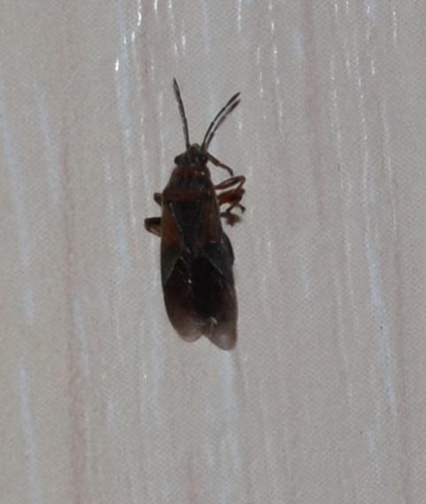 Странные насекомые в квартире