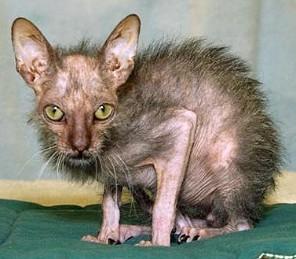 самая страшная в мире кошка фото