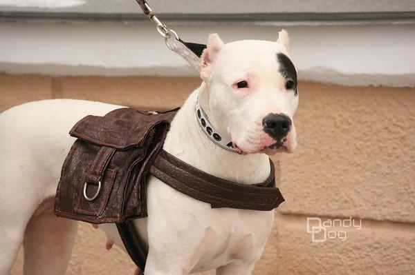 Выколйка рюкзака для собаки черный кожаный рюкзак фото