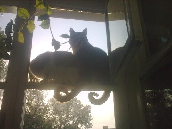 Ответы@mail.ru: а у вас кошки на балконе гуляют без присмотр.