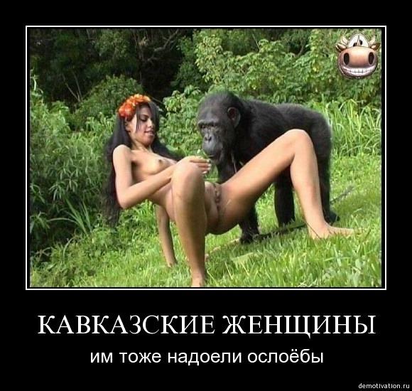 шимпандзе трахает бабу