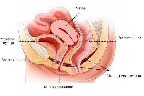 Влагина у женщин фото 606-265
